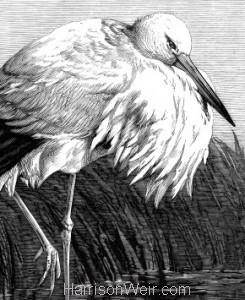 Waterfowl Print Portrait Format