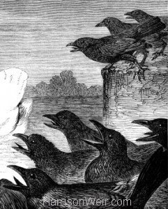 Detail: The Swan and the Crows, by Harrison Weir