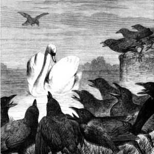 1878 The Swan and the Crows, by Harrison Weir