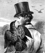 1878 The Tame Crow, by Harrison Weir