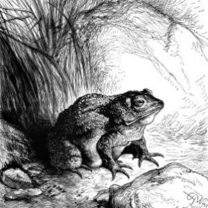 1878 The Toad, by Harrison Weir