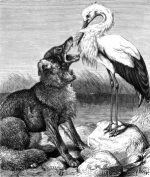 1878 The Wolf and the Stork, by Harrison Weir