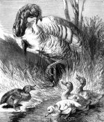 1878 Turkey-Cock and Ducklings by Harrison Weir