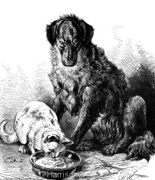 1878 Wally's Foundling, by Harrison Weir