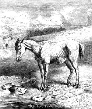1878 Worn Out, by Harrison Weir