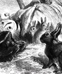 Detail: Young Rabbits in the Scare-crow, by Harrison Weir