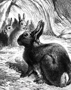 "Detail"" Young Rabbits in the Scare-crow, by Harrison Weir"
