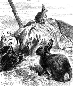 1878 Young Rabbits in the Scare-crow, by Harrison Weir