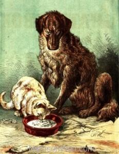 1878 Wally's Foundling (Col.) by Harrison Weir