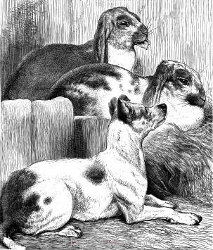 1878 Peace, by Harrison Weir