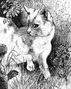 Detail: Cat and Hare, by Harrison Weir