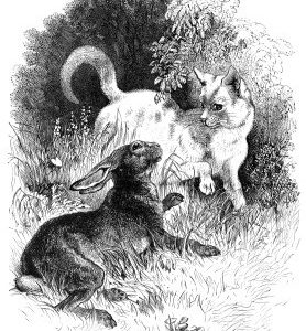 1879 Cat and Hare, by Harrison Weir