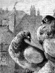 Detail: 1879 The Pigeons by Harrison Weir