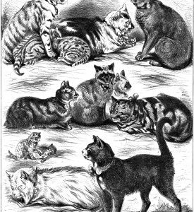 1879 (Oct) Crystal Palace Cat Show
