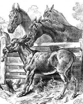 1879 The Pasture Gate by Harrison Weir