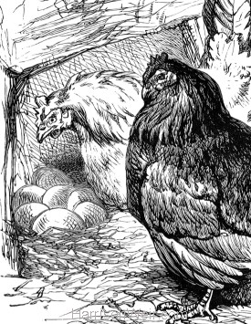 Detail: Pink shows Downy her nest, by Harrison Weir
