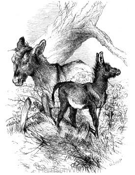1879 Jack Knows best, by Harrison Weir