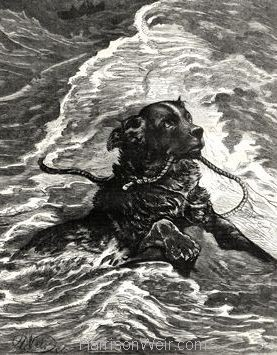 1880 Dog to the Rescue by Harrison weir