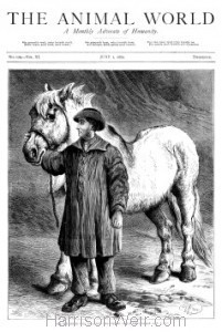 1880 June 1st, The Animal World..The Old Horse