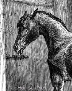 Detail: A Clever Horse by Harrison Weir
