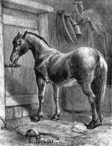 1880 A Clever Horse by Harrison Weir