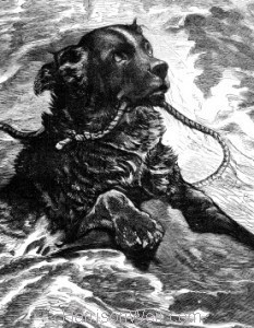 Detail: 1880 A Dog Which Ought Not To Be Taxed by Harrison Weir