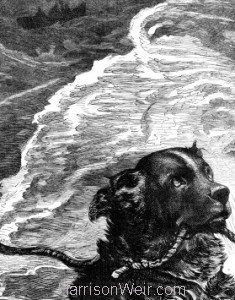 Detail: A Dog Which Ought Not To Be Taxed by Harrison Weir