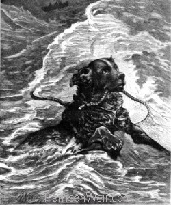 1880 A Dog that ought not to be taxed..by Harrison Weir