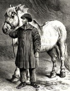 1880 The Old Horse by Harrison Weir