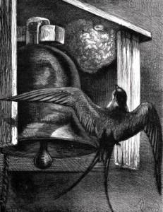 1881 The Nest in the Belfry by Harrison Weir