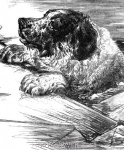 Detail: A Dog rescued from the Ice, by Harrison Weir