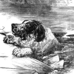 1882 A Dog rescued from the Ice, by Harrison Weir