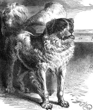 1882 Neptune's Trust by Harrison Weir