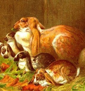 1882 Home Pets: Rabbits by Harrison Weir