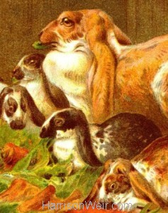 Detail: 1882 Home Pets: Rabbits by Harrison Weir