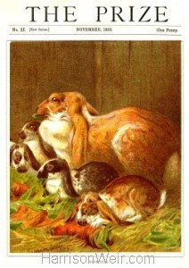 1882 The Prize Nov. Home Pets by Harrison Weir
