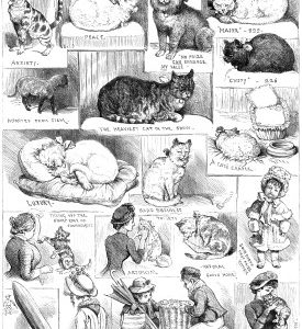 1883 (Oct) Crystal Palace Cat Show -Sketches by Corbould