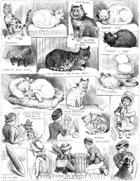 1883 oct the crystal palace sketches from the cat show harrison