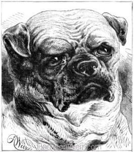 1884 The Pug Dog by Harrison Weir
