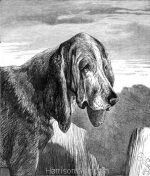 1877 The Bloodhound by Harrison Weir