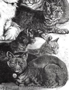 Detail: 1873 Prize Cats by Harrison Weir