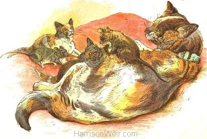 1885 Cat raising Rats & Kittens by Harrison Weir