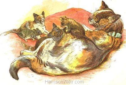 1885 Cat raising Rats & Kittens by Harrison Weir
