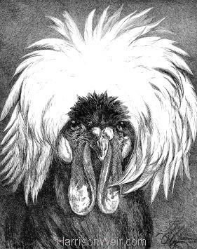 1886 Black Polish Fowl by Harrison Weir