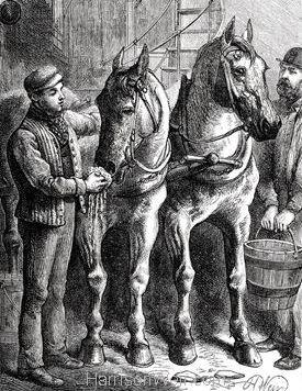 1886 Refreshing the Tram Car Horses by Harrison Weir