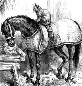 1888 Strange Friends by Harrison Weir