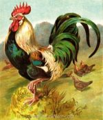 1887 The King of the Poultry-Yard, by Harrison Weir