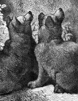 Detail: Bear and Cubs, by Harrison Weir