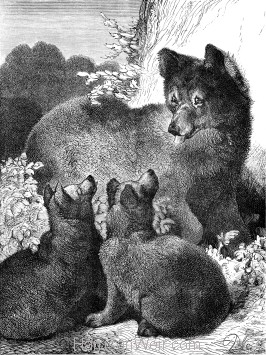 1891 Bear and Cubs, by Harrison Weir
