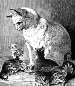 1891 Cat and Kittens, by Harrison Weir
